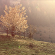Autumn landscape in the sunshine - Transylvania mountains — Stock Photo