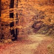 Stock Photo: Pathway through autumn forest