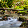 Creek closeup in the mountains — Stock Photo