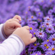Little baby picking flowers — Stock Photo