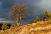 Autumnal tree on the hill under the moody sky and sunshine — Stock Photo