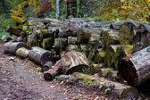 Grande grupo de tocos lenha cortada ao longo da estrada em uma floresta — Fotografia Stock