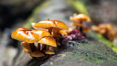 Macro photography. Mushroom in forest — Stock Photo