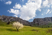 Spring tree under the mountains — Stock fotografie