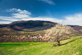 Village under the mountains in Transylvania with lonely spring tree. — Foto Stock