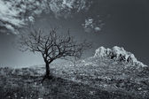 Lonely dead tree with mountain rocks in the background. Dramatic landscape scene. — Stock Photo