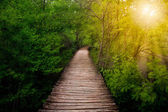 Deep forest pathway in the sunshine. Plitvice lakes, Croatia — Stock Photo