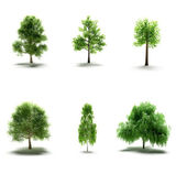Elm, Oak, Birch, Willow, Maple, Tree — Stock Photo
