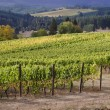 Two Vineyards — Stock Photo #13867803
