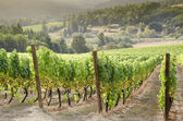 Oregon wine country — Stock Photo