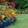 Colorful Garden detail — Foto de Stock