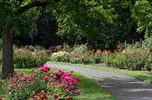 Owen gül Bahçe — Stok fotoğraf