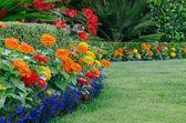 Colorful Garden detail — Stock Photo