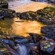 Golden Waters — Foto Stock