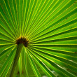 Backlit palmetto — Stock Photo #13345308