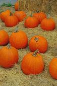 Pick a pumpkin — Stock Photo