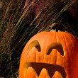 Pumpkin and ornamental grass — Stock Photo