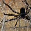 Stock Photo: Arachnid decor