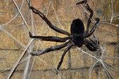 Arachnid decor — Stock Photo