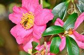 Bee snagging pollen — Stock Photo