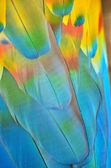 Macaw feathers — Stock Photo