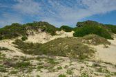 Dunes at Historic American Beach in Florida — Stockfoto