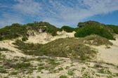 Duny v historické americký beach na floridě — Stock fotografie