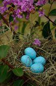 Easter bird eggs in a bush — Stock Photo