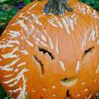 Kitty cat jack-o-lantern — Stock Photo