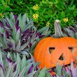 Orange pumpkin in purple plants — Stock Photo