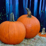 Orange pumpkins against blue backdrop — Stock Photo