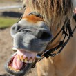 Stock Photo: Horse language