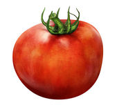 Llustration of red tomato isolated on white background — Stock Photo