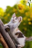 Tricolor kitten — Stock Photo