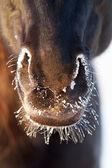 Черная лошадь — Стоковое фото