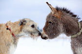 Dog and donkey — Stock Photo