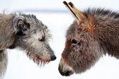 Chiens et l'âne — Photo