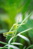 Insekt — Stockfoto