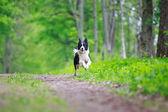 動物 — ストック写真