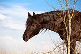 Zvíře — Stock fotografie