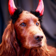 Helloween Dog — Stock Photo