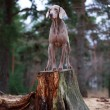 Dog and dry tree — Stock Photo