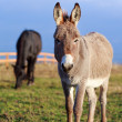 Donkey and horse — Foto Stock #37581781