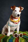 Perro Terrier — Foto de Stock