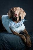 Animal cachorro — Fotografia Stock