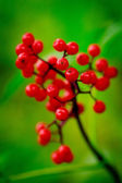 Red berries — Stockfoto