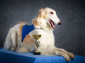 Dog photo in studio — Stock Photo