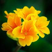 Beautiful flower — Stock Photo
