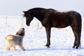 Horse and dog — Stock Photo