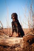 Dog on nature — Stock Photo